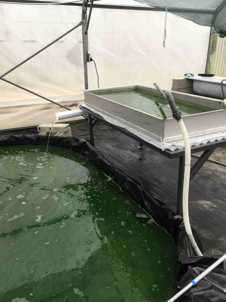 filtration pour spiruline de qualité paysanne artisanale