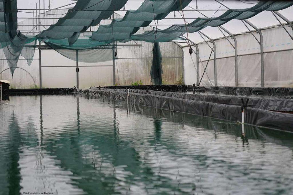 bassins-spiruline-paysanne-vendee-ecologique-finfarine-poiroux-serre