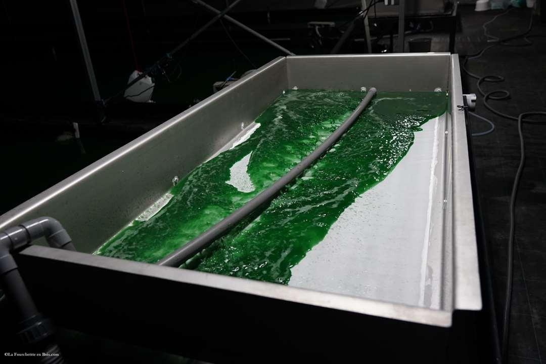 filtration de la spiruline, la spiruline de finfarine production de spiruline en vendée